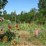 Rites of Spring: the wildlife-friendly garden
